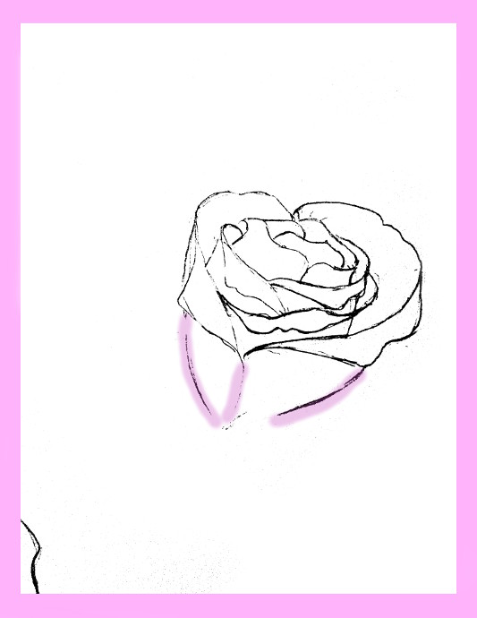 533x690 How To Draw Roses