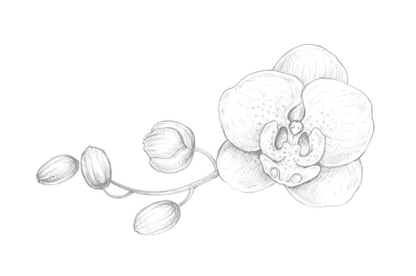850x565 How To Draw An Orchid With Pastel Pencils