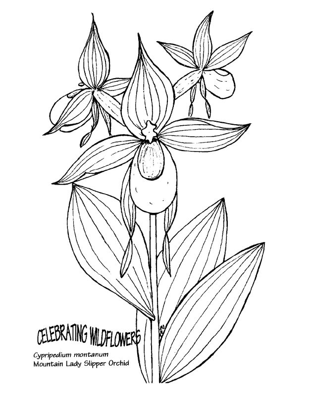628x796 Pink Lady Slipper Clipart