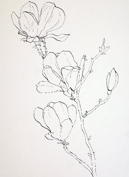 438x600 Drawing Pink Magnolia Flowers Pen And Ink Plus Watercolor Wash