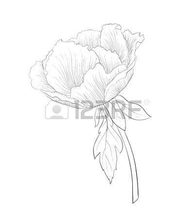 399x450 Peony Suffruticosa Images Amp Stock Pictures. Royalty Free Peony