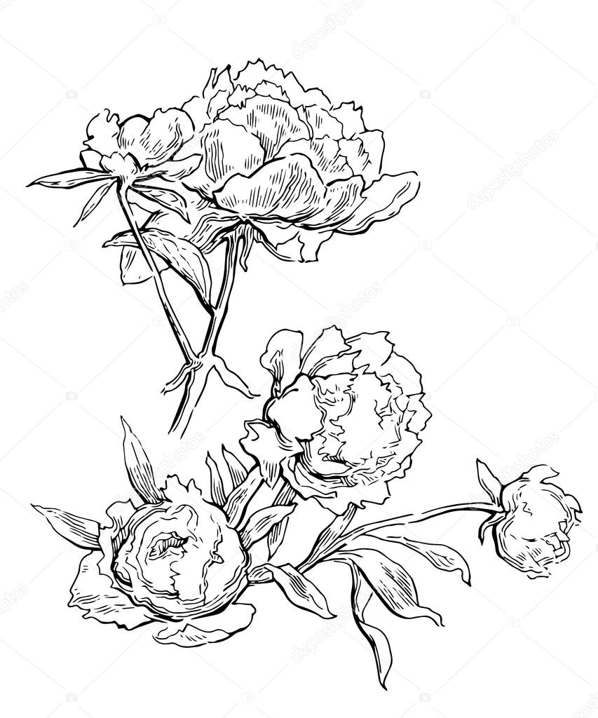 853x1024 Pink Peonies. Vector Illustration Stock Vector Ring Ring