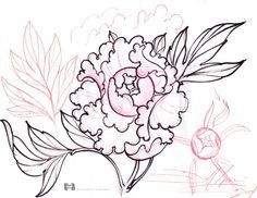 236x182 How To Draw A Peony, Peony Flower Step 4 Sketchbook