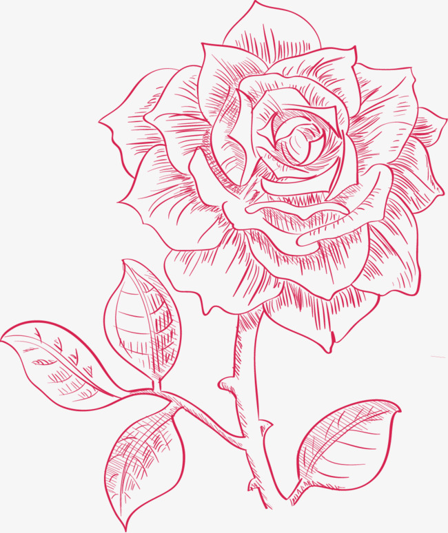 650x774 Hand Painted Roses Vector, Big Red Flower, Hand Painted Roses