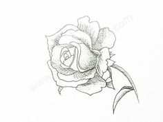 236x177 How To Draw A Rose How To Draw A Rose Pictures 1 Creat !!(.