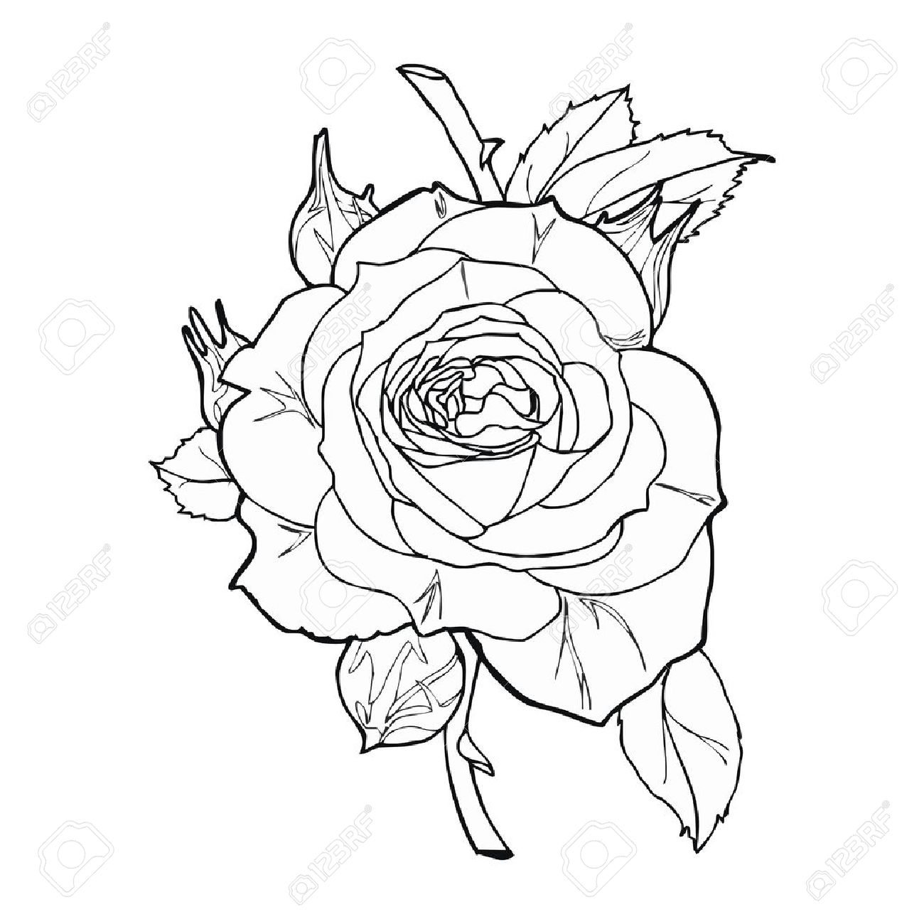 1300x1300 Rose Sketch Vector Royalty Free Cliparts, Vectors, And Stock