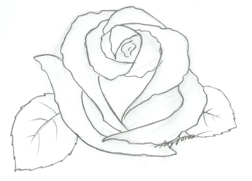 1024x735 Coloring A Rose Bride From Fryer Of A Rose Of Perfect Formation