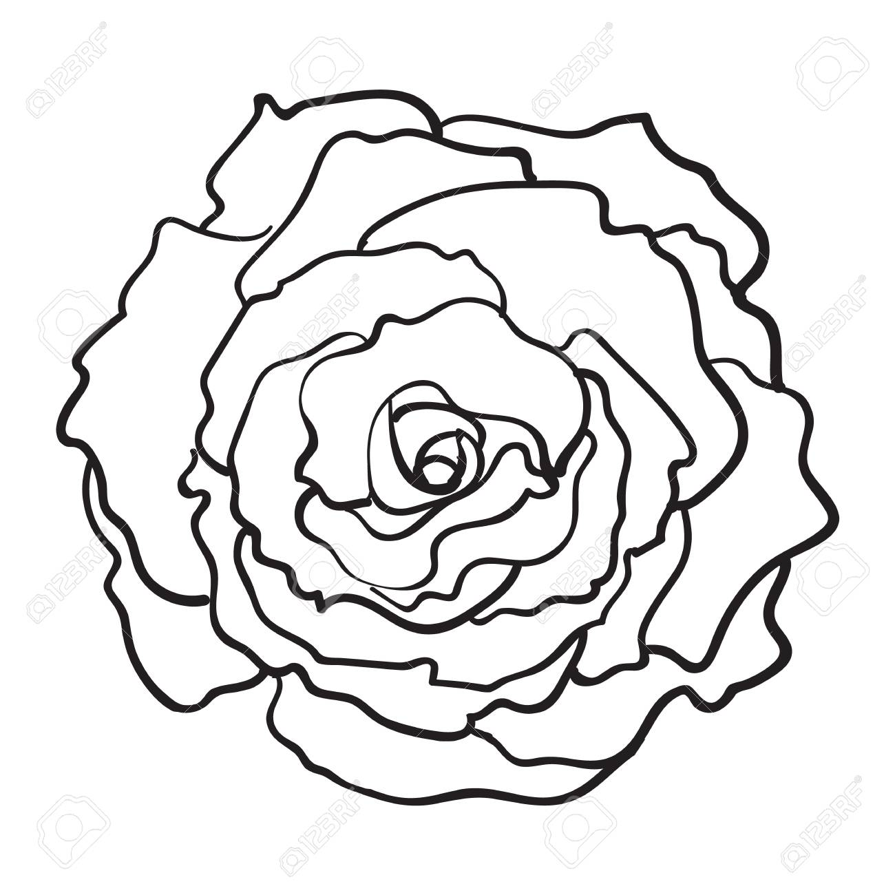 1300x1300 Deep Contour Rose Bud, Top View Sketch Style Vector Illustration