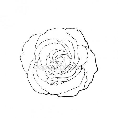 450x450 Deep Pink Rose, Top View Isolated Sketch Vector Illustration