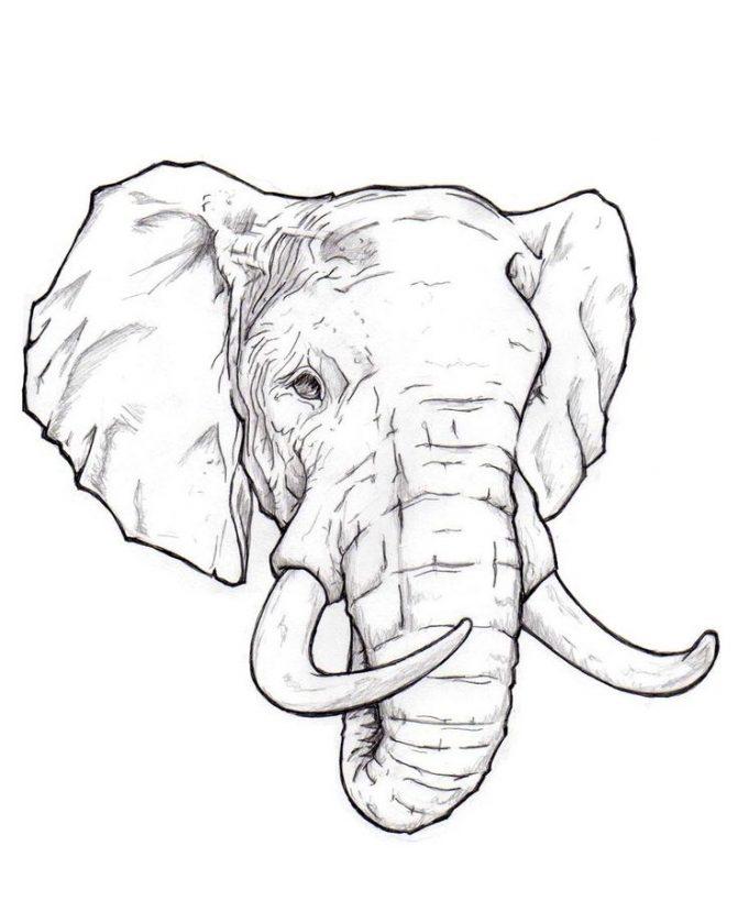671x839 Elephant Head Drawing Tags Elephant Head Drawing Easy