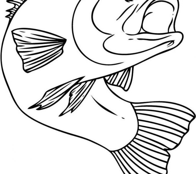 678x600 Free Drawing Pictures Kids Coloring Page