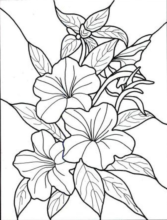 564x744 Flowers Drawing