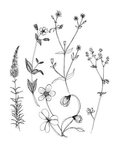 400x494 Ideal Picture Of Rosemary Plant 1000 Ideas About Flower Drawings