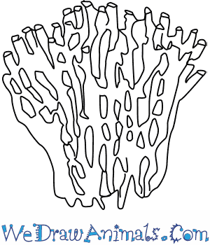 300x350 How To Draw An Organ Pipe Coral