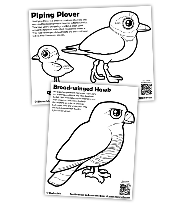 640x724 New Coloring Pages Piping Plover And Broad Winged Hawk In Free