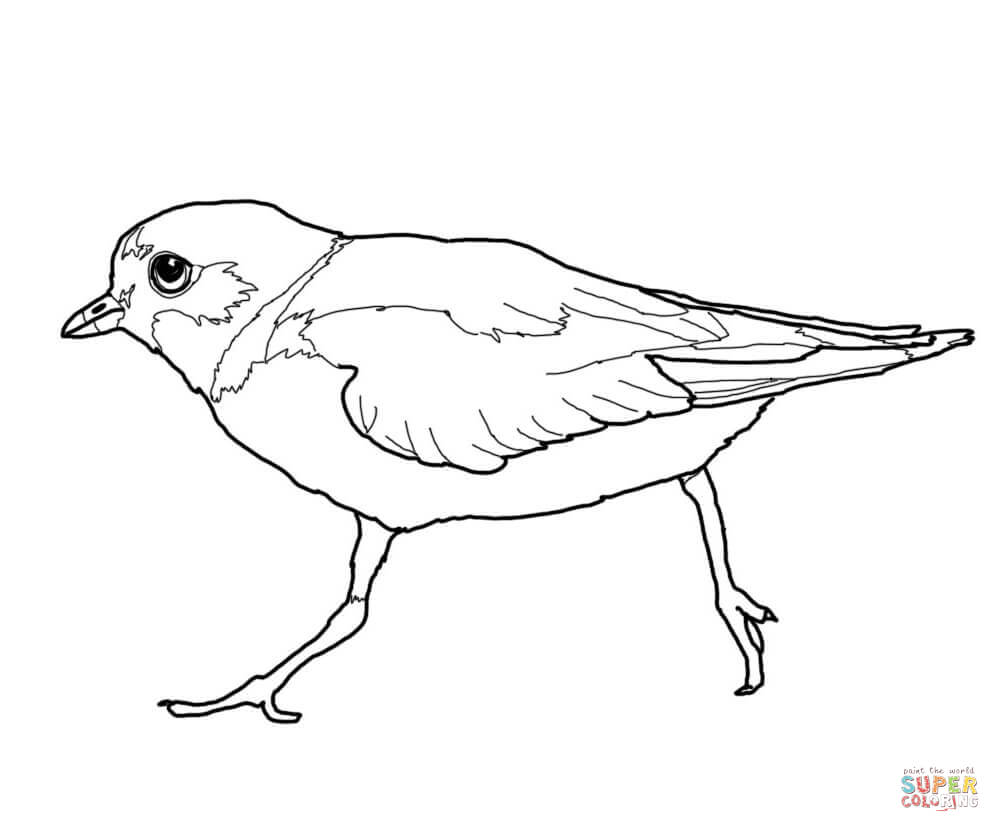 1000x832 Piping Plover Coloring Pages Free Coloring Pages