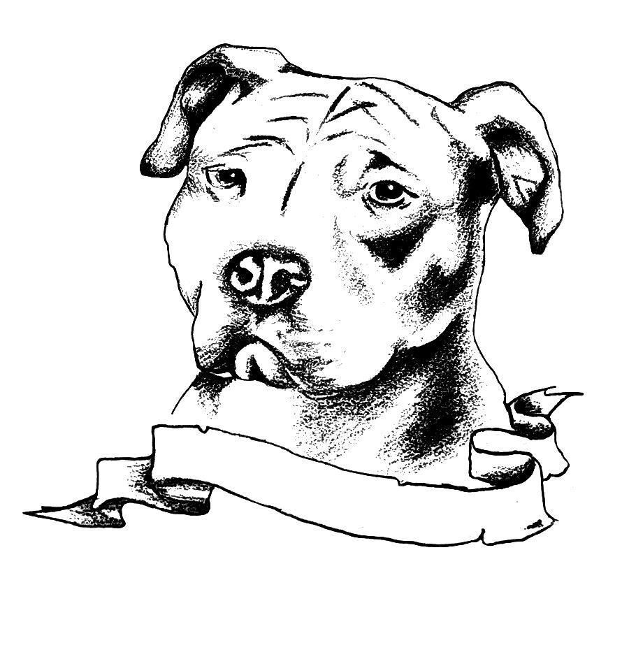 900x943 Pitbull Head Sketches Pitbull Head Sketches Famous Pencil Drawings