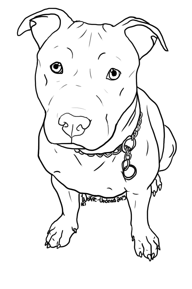 640x960 Free To Use Pit Bull Lineart! ^ ^ Please Read The Rules Before