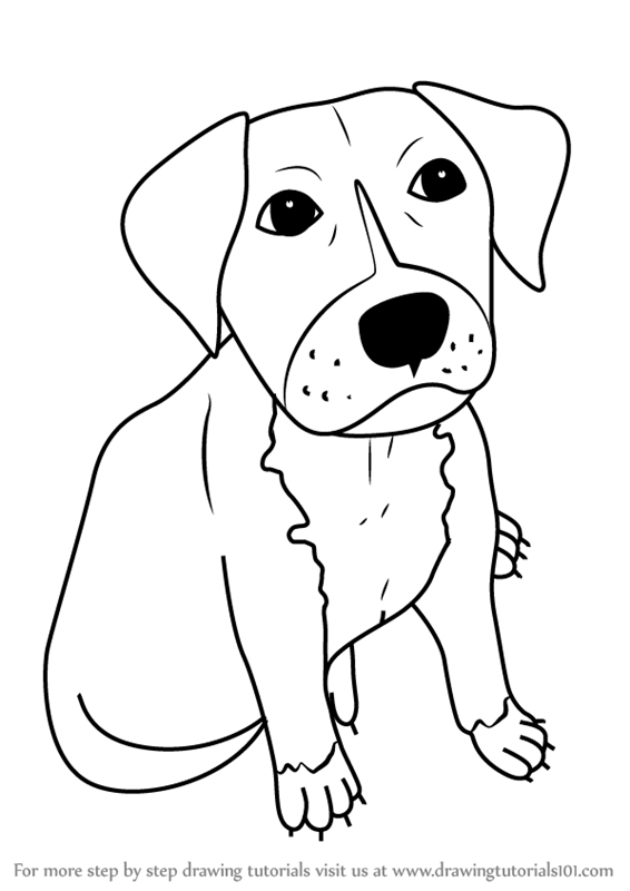 566x800 Learn How To Draw A Cartoon Pitbull Puppy (Cartoon Animals) Step