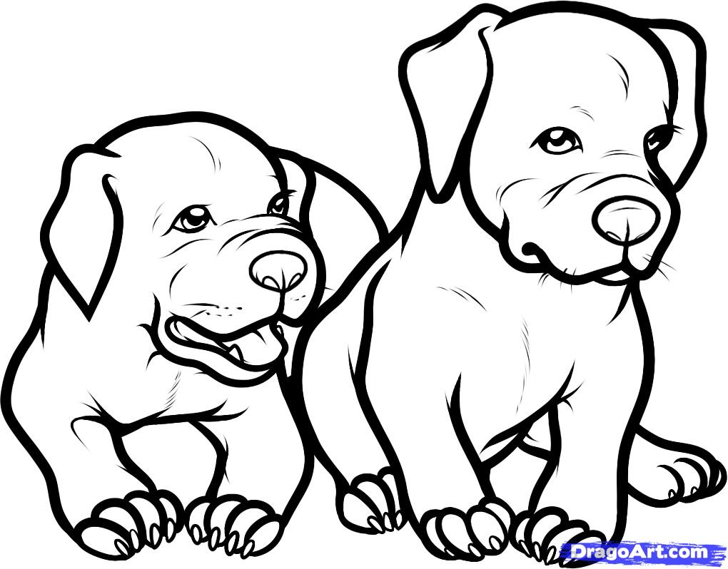 1020x798 Only Pitbull Dogs Coloring Pages How To Draw Baby Pitbulls, Baby