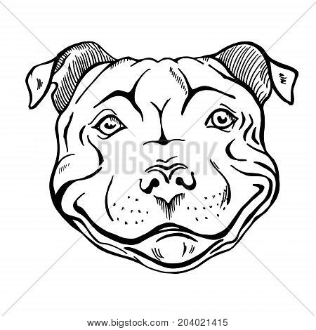 450x470 Pit Bull Smiling Dog Face Portrait Vector Amp Photo Bigstock