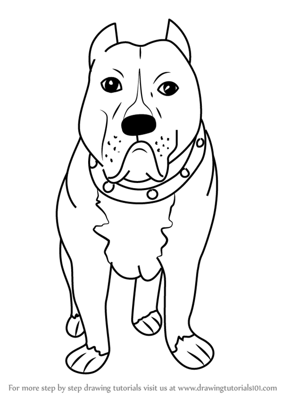 566x800 Learn How To Draw A Cartoon Pitbull Dog (Cartoon Animals) Step By