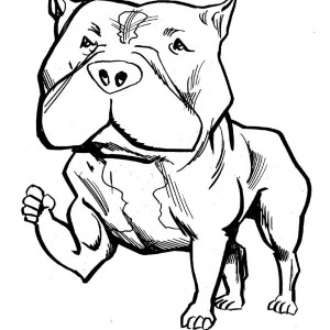 Pitbull Dog Drawing At Getdrawings Com Free For Personal Use