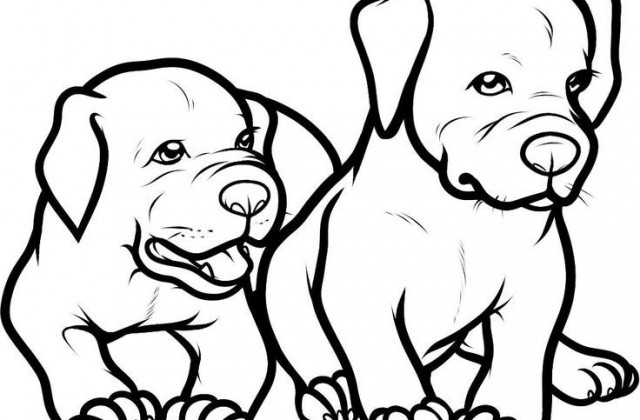 640x420 Tag For Baby And Dog Drawings Only Pitbull Dogs Coloring Pages
