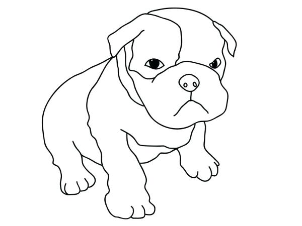 600x450 Unique Pitbull Coloring Pages Free Download Dog Page Face Pin