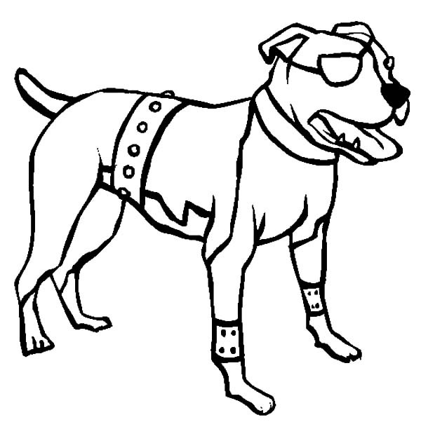 600x612 American Pitbull Boxer Dog Coloring Pages Best Place To Color