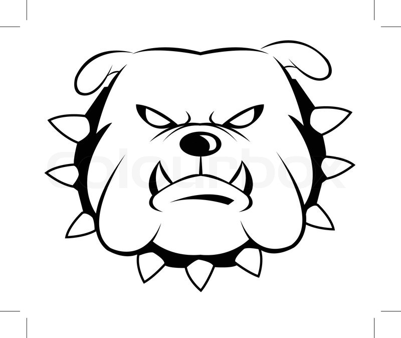 800x674 Drawing Of Pitbull Head On White Background,vector Illustration