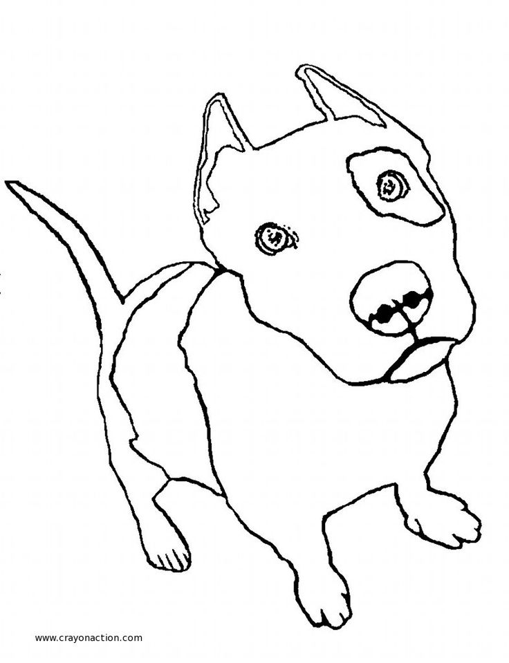736x959 Drawn Pit Bull Coloring Page