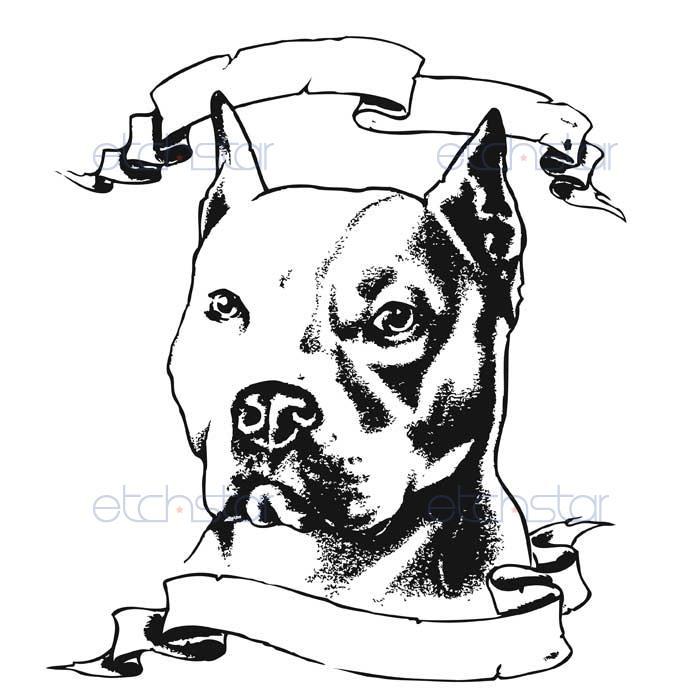 700x700 Pitbull Head Drawings Images Pitbull Drawings