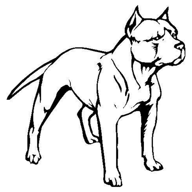 Pitbull Line Drawing