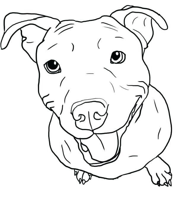 600x668 Pitbull Coloring Page Love Digital Download Dog Art Pitbull Sugar