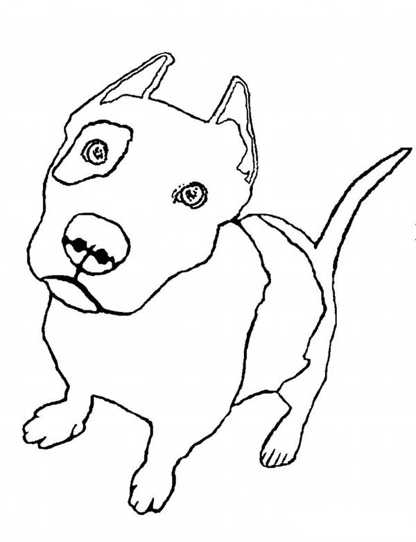 Pitbull Line Drawing at GetDrawings.com | Free for personal use ...