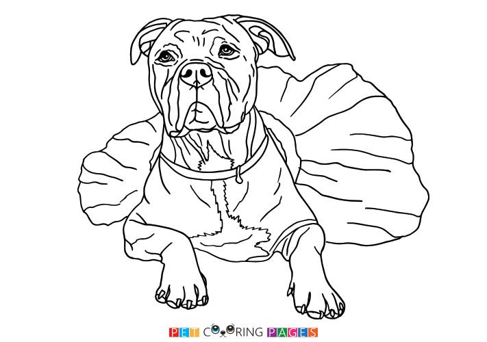 Pitbull Line Drawing at GetDrawings | Free download