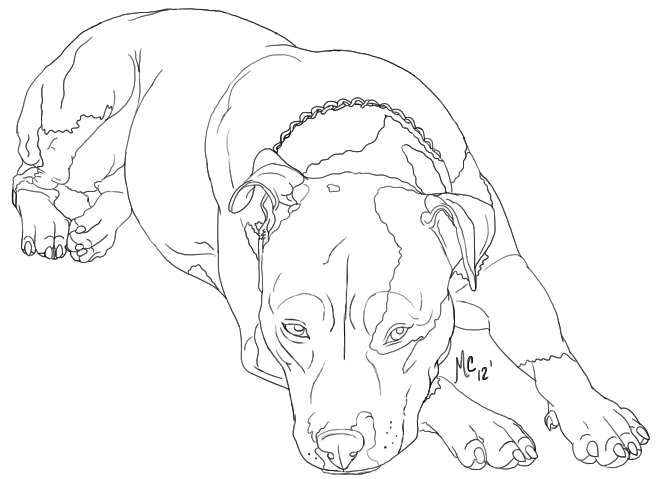 657x479 American Pitbull Terrier Contribution By Little Wildcat