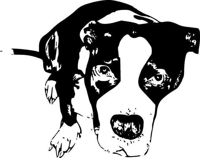 640x507 Puppy, Dog, Cute, Doggy, Pit Bull