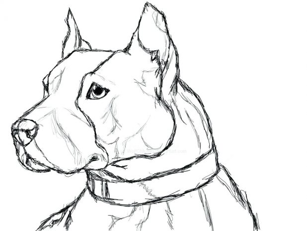 618x464 Dogs Coloring Pages Only Realistic Pitbull Puppy Cute Realistic
