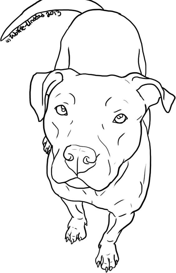 564x872 Free To Use Pit Bull Lineart! ^ ^ Please Read The Rules Before