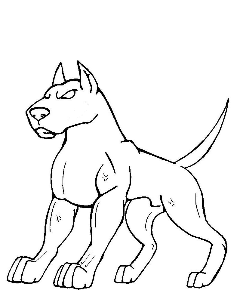 798x964 Pitbull Lineart Male By Sabrewolfqueen