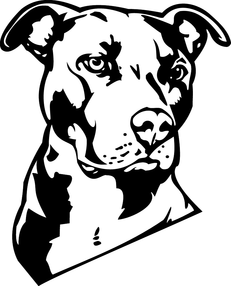 800x992 Pitbull Black And White Drawing