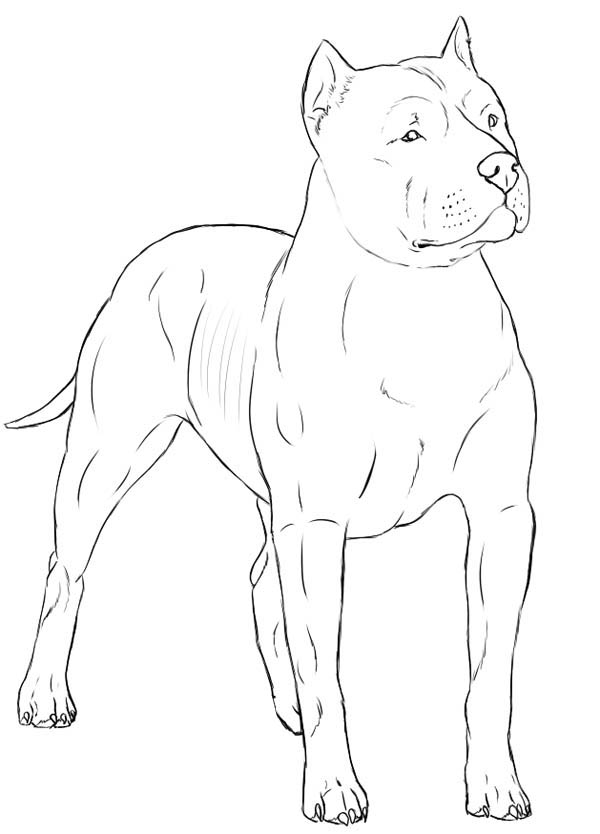 600x834 Alpha Male Pitbull Coloring Page Coloring Sky