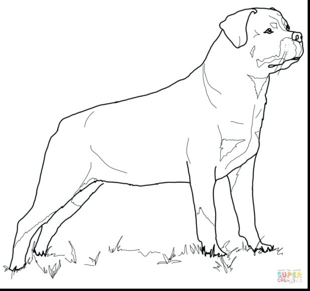 618x581 Zoom 38 Glamorous Coloring Pages Of Pit Bulls Free Coloring Pages