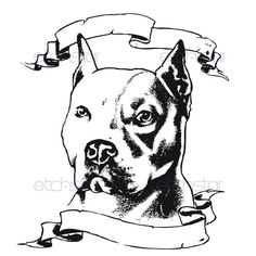 236x236 Collored Pencil Drawing Of A Pit Bull Dog Dogs Drawing Art. Pin