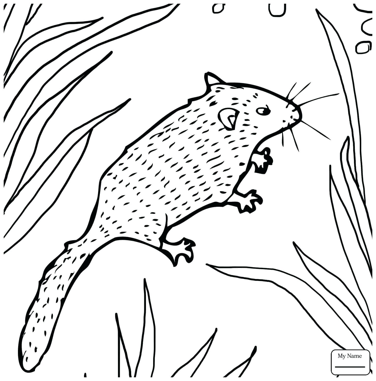 1530x1550 Coloring Cheese Coloring Pages Pizza Of Food For Kids Slice Page