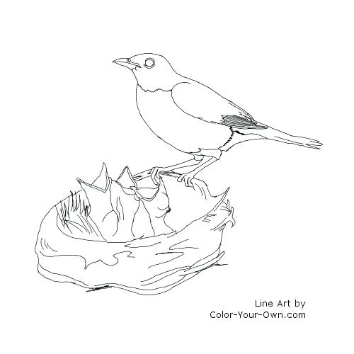 500x500 Robin Bird Coloring Pages Plain Robin Bird Coloring Page Following