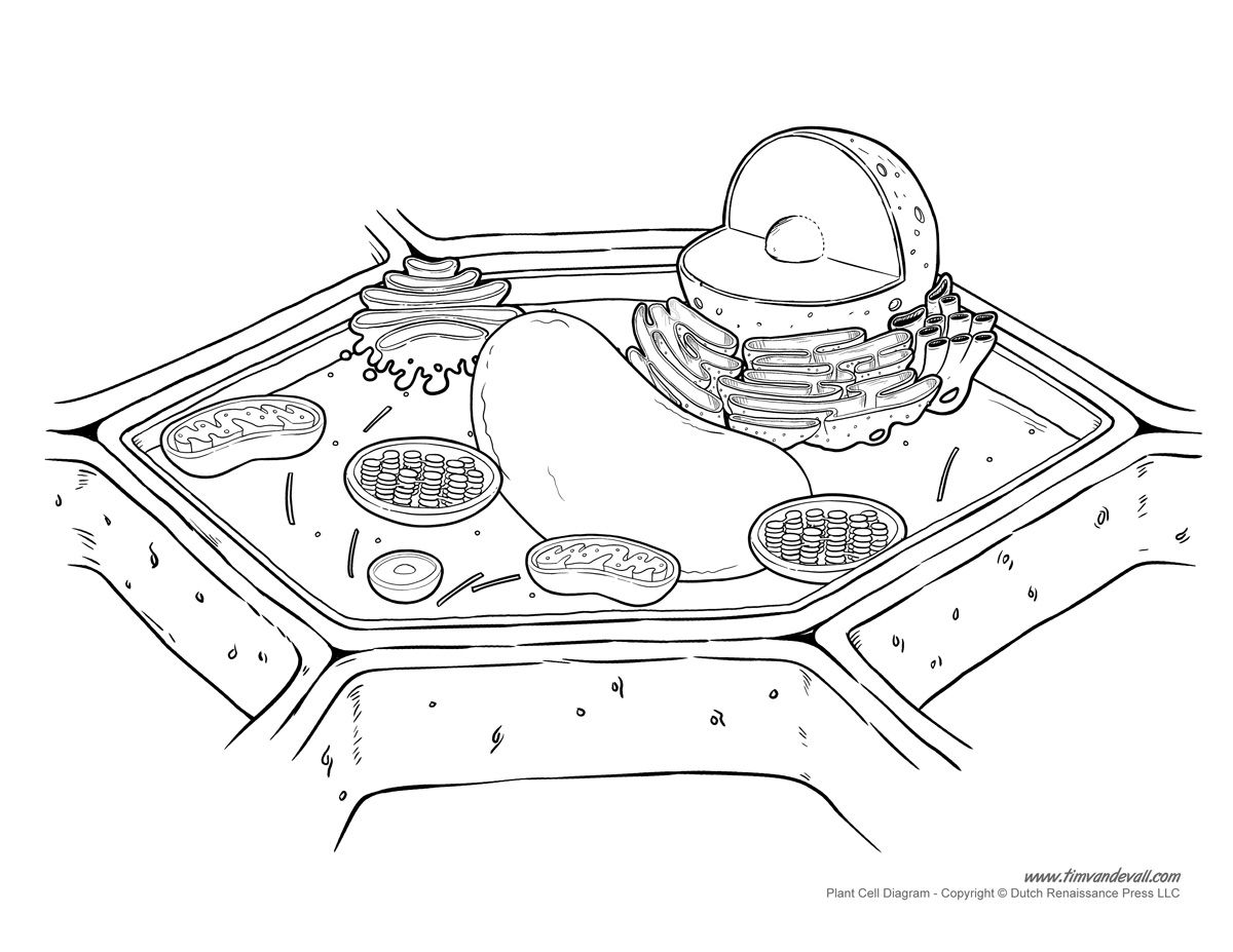 Plant Cell Drawing At Free For Personal Use Diagram 3d Model Science Project Pinterest 1200x927 Image Result
