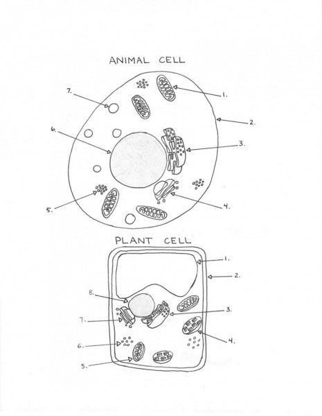 465x600 Plant Cell Diagram School Days Plant Cell, History